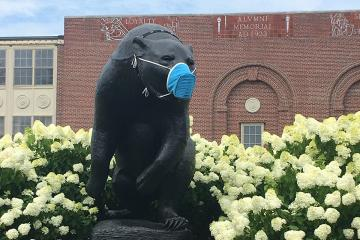 Bear statue wearing face mask. Photo courtesy of Fogler Library Special Collections & Archives.