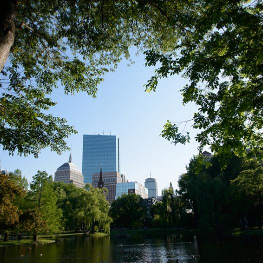 The city of Boston through the trees
